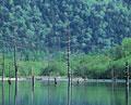 タイトル:新緑と湖