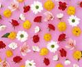 タイトル:花いろいろ
