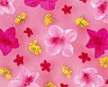 タイトル:菜の花とツツジ