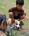 タイトル:犬の散歩