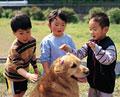 タイトル:子供とゴールデンレトリーバー