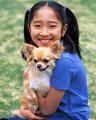 タイトル:少女とロングコートチワワ