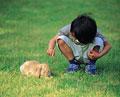 タイトル:男の子とウサギ