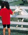 タイトル:少女とヤギ