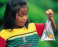 タイトル:少女とキンギョ
