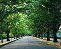 タイトル:街路樹