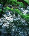 タイトル:清滝川