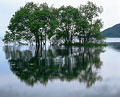 タイトル:水面に映る樹木