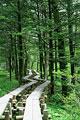 タイトル:木道