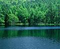 タイトル:池