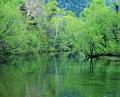 タイトル:上高地の川