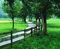 タイトル:田舎道
