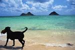 波打ち際のイヌ