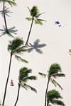 白い砂浜とヤシ
