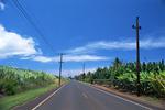 ノースショアの道