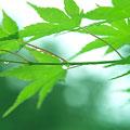 タイトル:新緑イメージ