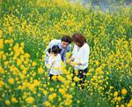 菜の花畑の家族