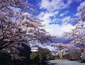 タイトル:霞ヶ城公園