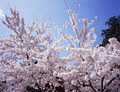 タイトル:鹽竃神社