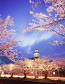 タイトル:鶴岡公園