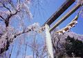 タイトル:烏帽子山公園