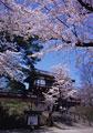 タイトル:千秋公園