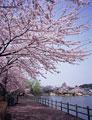タイトル:高松公園