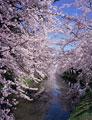 タイトル:弘前城