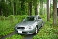 タイトル:林の中に停まっている自動車