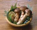タイトル:松茸のかご盛り