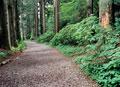 タイトル:林道