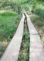 タイトル:高原にある小道