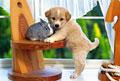タイトル:子犬とウサギ