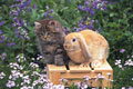 タイトル:仔猫とウサギ