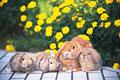 タイトル:ウサギ