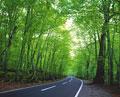 タイトル:林間の道路