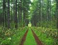 タイトル:林間の道