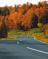 タイトル:紅葉の道