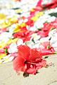 タイトル:花を浮かべたスパ
