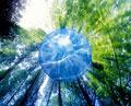 タイトル:森林(CG)