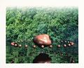 タイトル:森林浴イメージ