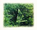タイトル:森林浴イメージ(CG)