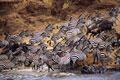 タイトル:群れの大移動