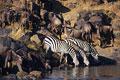 タイトル:水飲み場にいる野生動物