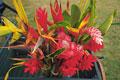 タイトル:熱帯植物イメージ