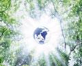 タイトル:木洩れ日