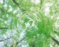 タイトル:木洩れ日イメージ