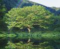 タイトル:一本の木