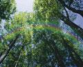 タイトル:森のイメージ