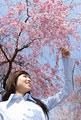 タイトル:枝垂桜と女性